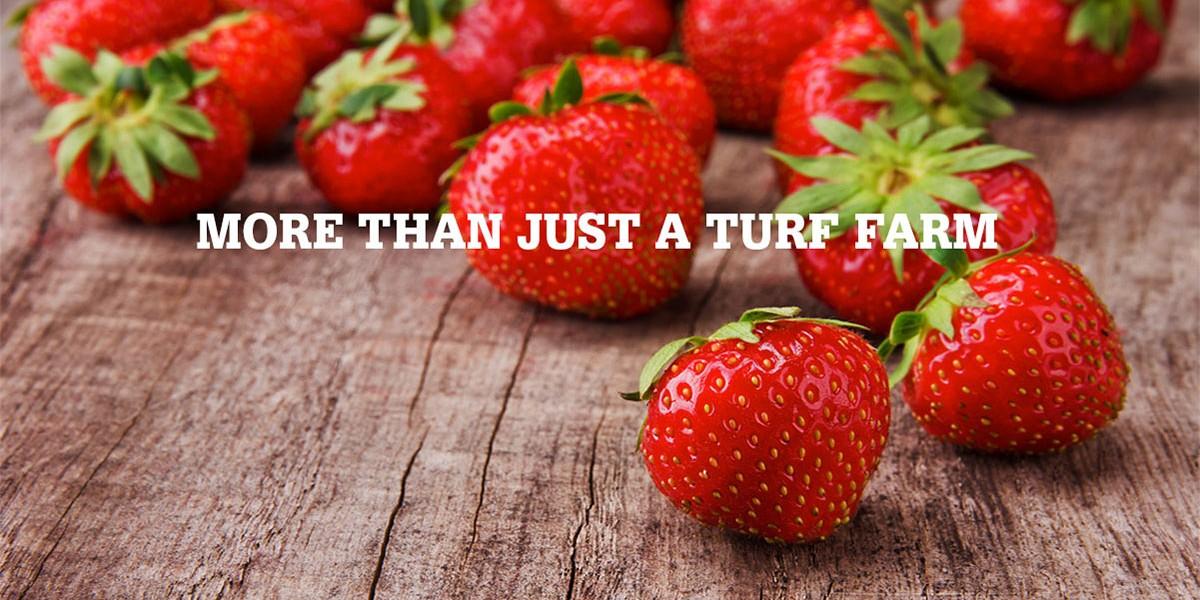 More than just a turf farm
